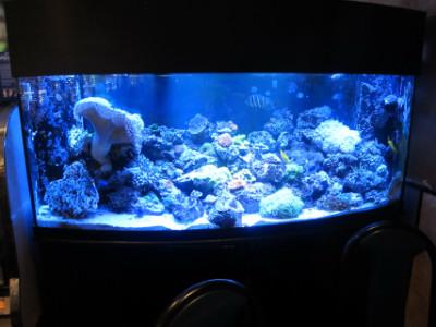 Lido's aquarium